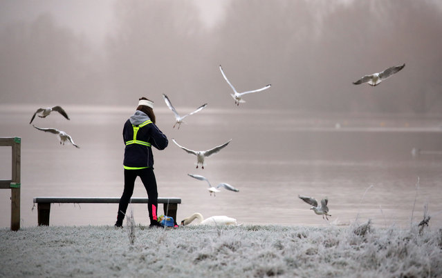 A lady tries to feed a swan but seagulls invade the scene on a frosty start to the day at Nene Park in Peterborough, Cambridgeshire, United Kingdom on December 31, 2020. (Photo by Paul Marriott/Rex Features/Shutterstock)