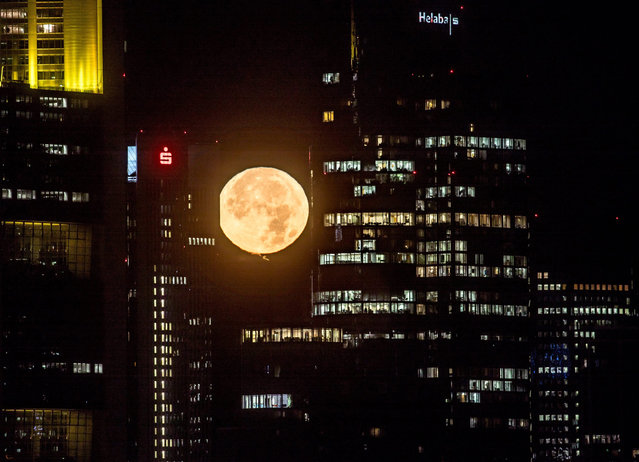 """The moon rises over Frankfurt am Main, Germany, early 14 November 2016. November will see the largest full moon since 1948, also known as the """"supermoon"""", when the moon reaches its closest point to Earth and becomes full at 8:52 AM EST, 13:52 UTC on 14 November. The next time the moon will be this close will be on 25 November 2034. (Photo by Frank Rumpenhorst/EPA)"""