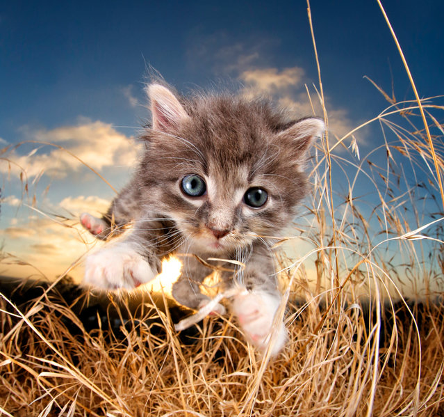 """BamBam. """"I want to thank that litter of kittens for inspiring what has become my purpose in life – to try to make the world a better place through photography"""". (Photo by  Seth Casteel/Hachette Australia)"""