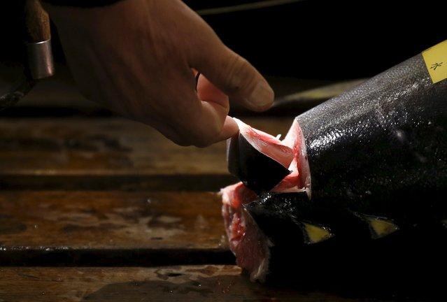 A wholesaler checks the quality of a fresh tuna displayed at the Tsukiji fish market before the New Year's auction in Tokyo, Japan, January 5, 2016. (Photo by Toru Hanai/Reuters)