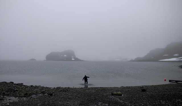 In this January 21, 2015 photo, scuba diver Luis Torres tests the water near the Chilean scientific station Escudero in Villa Las Estrellas on King George Island, part of the South Shetland Islands archipelago in Antarctica. For a dozen days in January, in the middle of the chilly Antarctic summer. (Photo by Natacha Pisarenko/AP Photo)