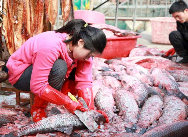 A woman scales fish by the side of a lake as she prepares for the upcoming Chinese Lunar New Year in Suqian, Jiangsu province, China, January 27, 2016. (Photo by Reuters/China Daily)