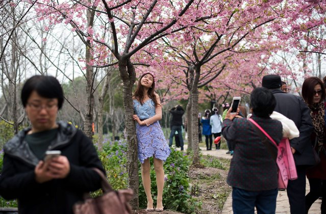 A mother (R) takes a snapshot of her daughter in front of a tree during the first day of the nearly one month-long Cherry Blossom Festival in Gucun Park in northern Shanghai on March 18, 2015. (Photo by Johannes Eisele/AFP Photo)