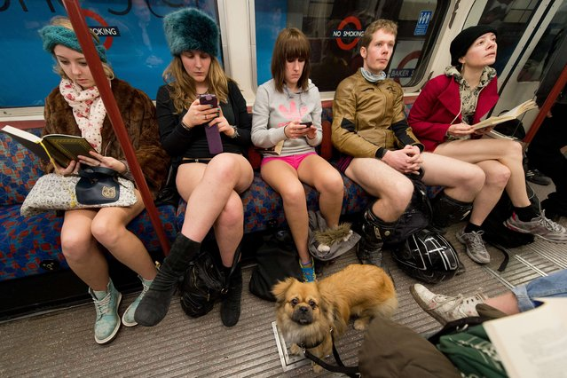 """A dog looks on as participants in the 13th annual International """"No Pants Subway Ride"""" travel on a London underground train in London, on January 12, 2014. Started in 2002 with only seven participants, the day is now marked in over 60 cities around the world.  (Photo by Leon Neal/AFP Photo)"""