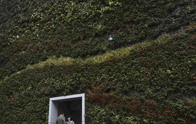 A couple stand in a doorway of an office building covered with flora, in the City of London, Britain March 2, 2016. (Photo by Toby Melville/Reuters)