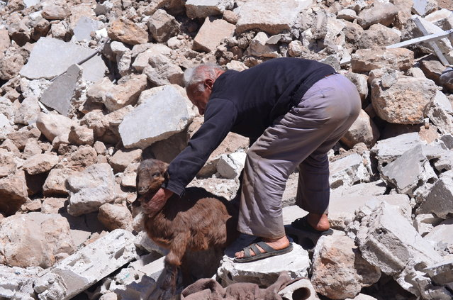 A civilian helps a goat stuck in rubble at a site hit by what activists said were airstrikes by forces loyal to Syria's President Bashar al-Assad in Ain Larouz village in the Jabal al-Zawiya region of Idlib province, Syria April 24, 2015. (Photo by Abed Kontar/Reuters)