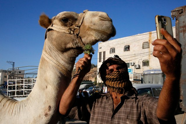 "A Palestinian man takes a selfie picture next to a camel at a livestock market in the West Bank city of Hebron on August 9, 2019, as muslims prepare for the Eid al-Adha celebrations. Known as the ""big"" festival, Eid Al-Adha is celebrated each year by Muslims sacrificing various animals according to religious traditions, including cows, camels, goats and sheep. (Photo by Hazem Bader/AFP Photo)"