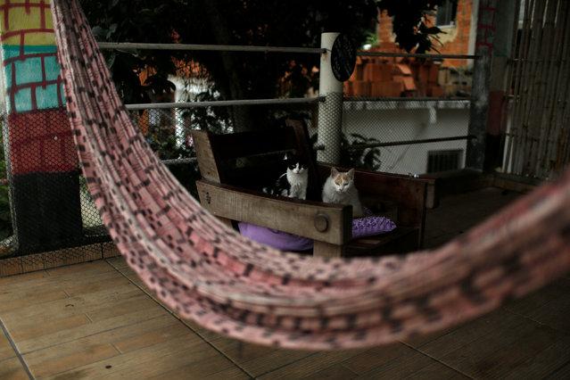 Cats sit on a chair at Pousada Favelinha (Little favela) hostel in Pereira da Silva favela, in Rio de Janeiro, Brazil, April 29, 2016. (Photo by Pilar Olivares/Reuters)