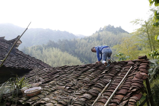 Xie Guobiao, 11, climbs on the roof of a neighbour's house after cutting himself loose from the rope he is usually tied up with, in Daohui village of Lishui, Zhejiang province May 8, 2014. (Photo by William Hong/Reuters)