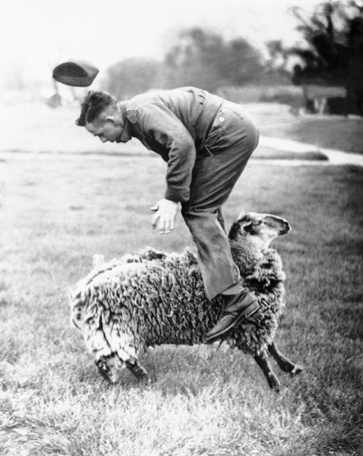 Larry the lamb, mascot of an anti-aircraft unit in the London area, June 20, 1941, tosses one of the gunners over his head during a game on a playing field. Larry, a year old, has been the  mascot of the unit since birth. He knows and follows all the routine of the station and goes to the cookhouse at the right time, attends parades, alarms and drills. (Photo by AP Photo)