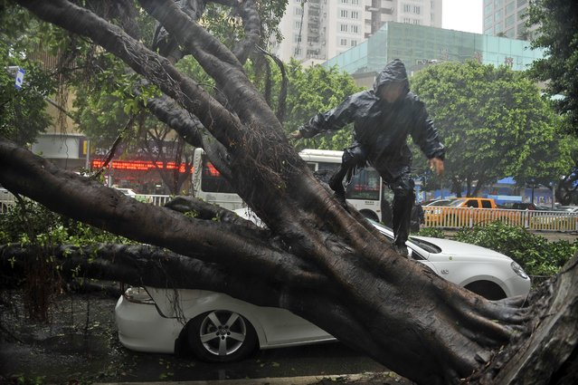 A worker climbs over a tree which fell on a car in a street in Fuzhou in southeast China's Fujian province 23 July 2014. Typhoon Matmo, the second to hit China in a week, landed in Fujian in the afternoon. (Photo by Liu Tao/EPA)