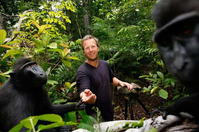 """Nature snapper David Slater was on a trip to Indonesia when an endangered crested black macaque grabbed his camera and started taking hundreds of pictures. When he looked at the shots, he spotted an incredible selfie of the grinning ape staring right into the camera lense. """"When I saw the picture I was just stunned. It was made even better when the story was picked up and it made thousands of people around the world happy"""". (Photo by David Slater)"""