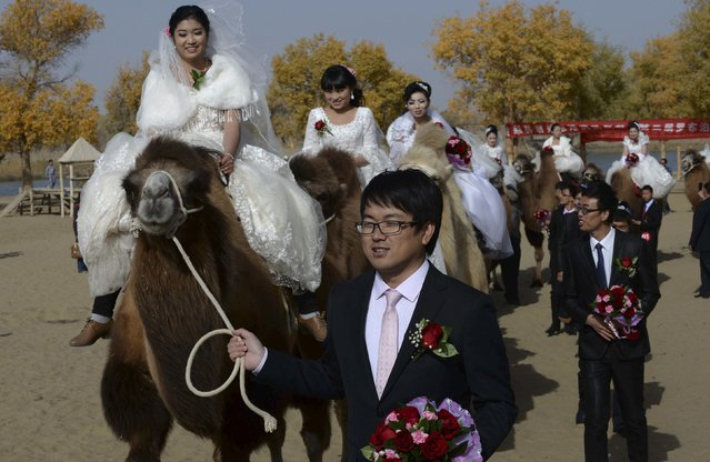 Newly-wed grooms lead camels carrying their brides during a mass wedding in a desert at a tourism area containing a populus euphratica reserve in Yuli county, Xinjiang Uighur Autonomous Region, November 2, 2014. (Photo by Reuters/China Daily)