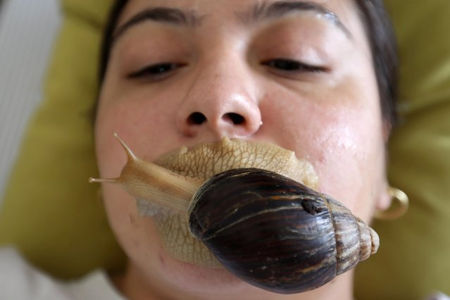 Alia Fares, 27, undergoes facial massage with Giant African land snails, which some claim boost collagen in the skin, at a centre in Amman, Jordan on September 16, 2020. (Photo by Muhammad Hamed/Reuters)