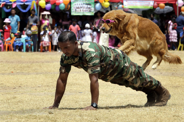 A dog from the K9 Division of the Sri Lanka Army's Commando Regiment performs during an event to mark International Children's Day at a school in Welisara, Colombo, Sri Lanka, 01 October 2016. Sri Lanka marks the Children's Day on 01 October with more emphasis on prevention of child abuse. (Photo by M.A. Pushpa Kumara/EPA)