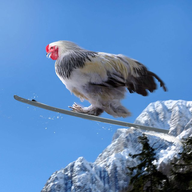 """Nice Pecks"" calendar: Ski jumping. (Photo by The happy egg co.)"