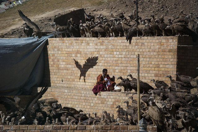 A Buddhist monk collects his belongings as vultures gather around a body of a deceased person during a sky burial near the Larung valley located some 3700 to 4000 metres above the sea level in Sertar county, Garze Tibetan Autonomous Prefecture, Sichuan province, China November 1, 2015. In early afternoons, on a hill near famous Larung Wuming Buddhist Institute relatives and onlookers gather for sky burials in which bodies of deceased people are offered to vultures to prey upon it. (Photo by Damir Sagolj/Reuters)