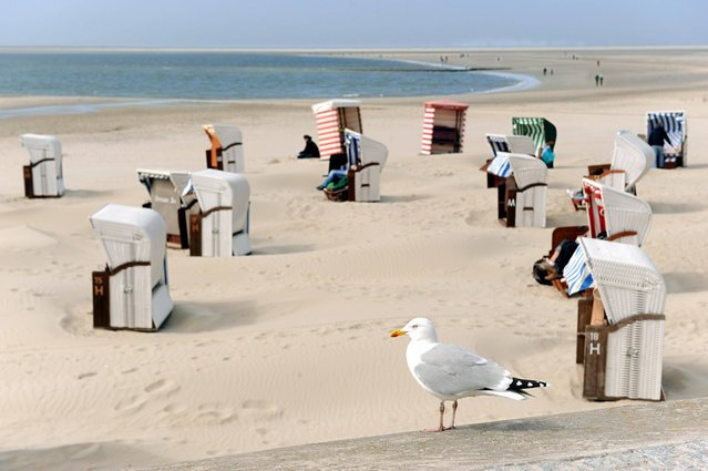 A seagull sits in front of sunbathers in beach chairs on the island of Borkum in the Northern Sea, Germany, Tuesday, April 23, 2013. (Photo by Ingo Wagner/AP Photo/Dpa)