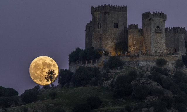 The moon rises behind the castle of Almodovar in Cordoba, southern Spain, on Sunday, November 13, 2016. The Supermoon on November 14, 2016, will be the closest a full moon has been to Earth since January 26, 1948. (Photo by Miguel Morenatti/AP Photo)
