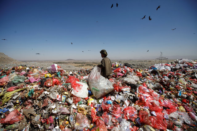 A boy stands on a pile of rubbish at landfill site on the outskirts of Sanaa, Yemen November 16, 2016. (Photo by Mohamed al-Sayaghi/Reuters)