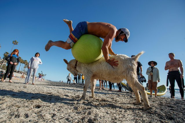 """Dana McGregor plays """"goat ball"""" on the beach after surfing with his goat Pismo in San Clemente, California, U.S., March 19, 2021. (Photo by Mike Blake/Reuters)"""