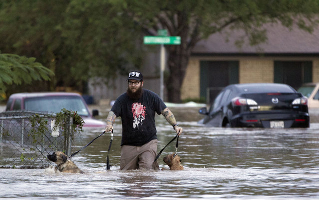 A man wades with two dogs through floodwaters in Austin, Texas, on October 31, 2013, after heavy overnight rains. (Photo by Deborah Cannon/AP Photo/The Austin American-Statesman)