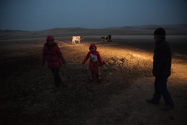 A family of herders at dusk, in the grassland of West Ujimuqin. The family has been forced to move out of their grassland due to a nearby coal mine. They have received a paltry compensation for the loss of their land. Mining development in the region, forcing the displacement of herders, as well as pollution, has lead to large scale protests. (Photo by Gilles Sabrie/The Washington Post)