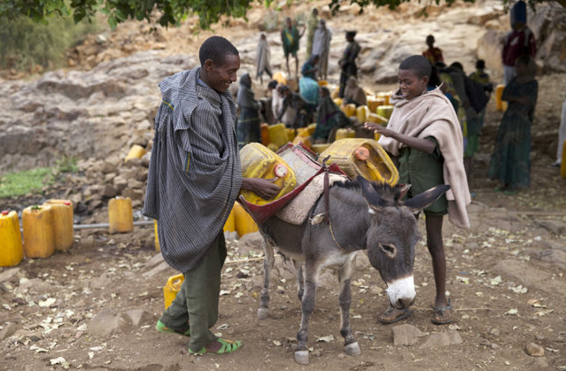 A man and a boy load a donkey with jerrycans of water collected from a stream outside the village of Tsemera in Ethiopia's northern Amhara region, February 13, 2016. (Photo by Katy Migiro/Reuters)