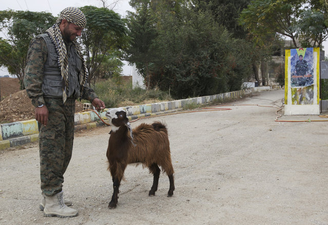 A member of the Kurdish People's Protection Units feeds a goat near the city of Ras al-Ain, Syria November 5, 2013. (Photo by Reuters/Stringer)