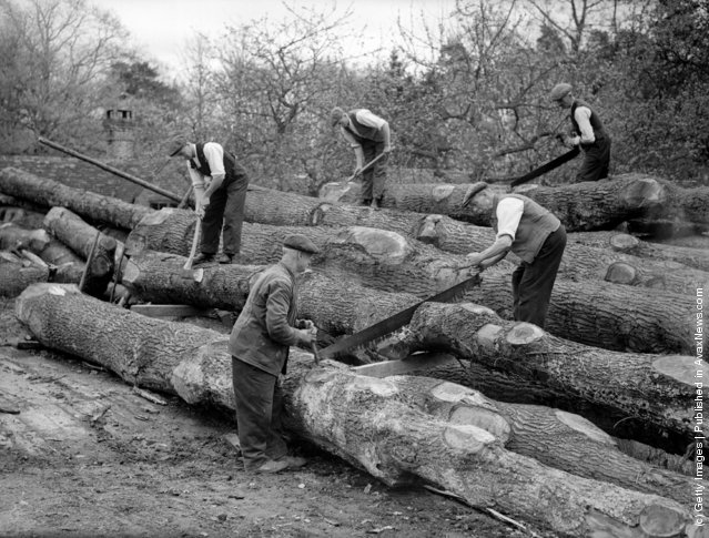 1940: Workmen sawing trees on the estate of Sir George Courthope in Whilagh near Wadhurst