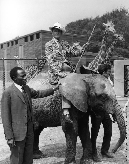Sir Henry Frederick Thynne, 6th Marquess of Bath (1905 - 1992) mounted on baby African elephant Wamba at Longleat Safari Park, his family seat in Wiltshire, 29th May 1968. Leading Wamba by the ear is Mr J. R. Kabuzi, the Acting High Commissioner for Uganda, who is at Longleat to open the new East African Game Reserve