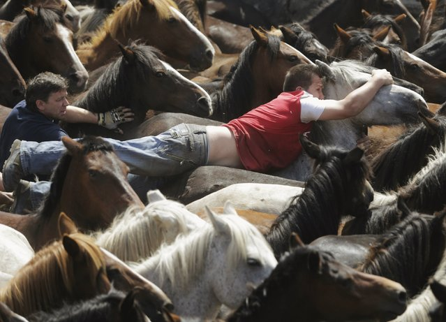 "Revellers try to hold on to a wild horse during the ""Rapa das Bestas"" traditional event in the village of Sabucedo, northwestern Spain, July 5, 2015. On the first weekend of the month of July, hundreds of wild horses are rounded up, trimmed and groomed in different villages in the Spanish northwestern region of Galicia. (Photo by Miguel Vidal/Reuters)"