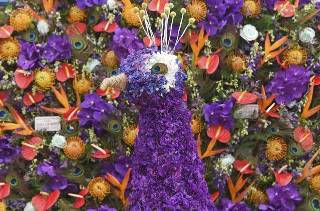 A peacock bird design made of flowers is seen at the Chelsea Flower Show in London, Britain, May 23, 2016. (Photo by Toby Melville/Reuters)