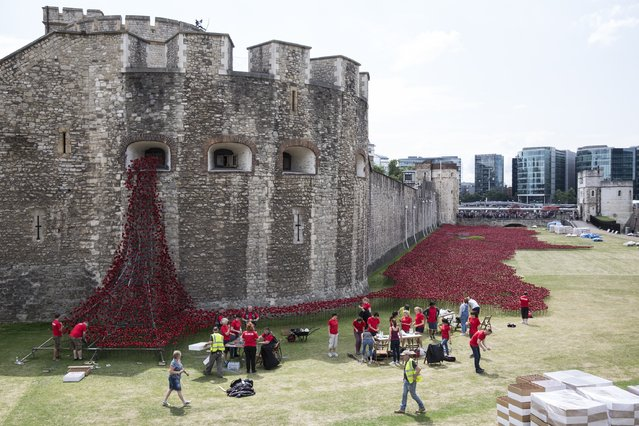 "Volunteers assemble an installation entitled ""Blood Swept Lands and Seas of Red"" by artist Paul Cummins, made up of 888,246 ceramic poppies in the moat of the Tower of London to commemorate the First World War on July 28, 2014 in London, England. Each ceramic poppy represents an allied victim of the First World War and the display is due to be completed by Armistice Day on November 11, 2014. (Photo by Oli Scarff/Getty Images)"