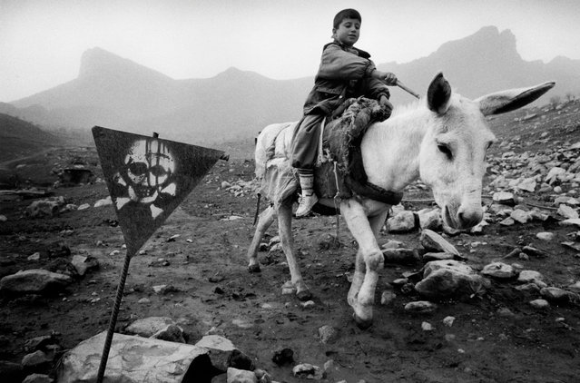 A boy steers his donkey through a minefield in northern Iraq in 2003. Mag has cleared more than 104 sq km of land in the region, allowing people to return to their homes and rebuild their lives. (Photo by Sean Sutton for the Mines Advisory Group/The Guardian)