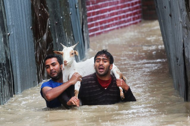 Kashmiri residents carrying a goat wade through floodwaters in Srinagar, India, Thursday, September 4, 2014. At least 100 villages across the Kashmir valley were flooded by overflowing lakes and rivers, in the worst flooding in 22 years caused by heavy rains. (Photo by Dar Yasin/AP Photo)