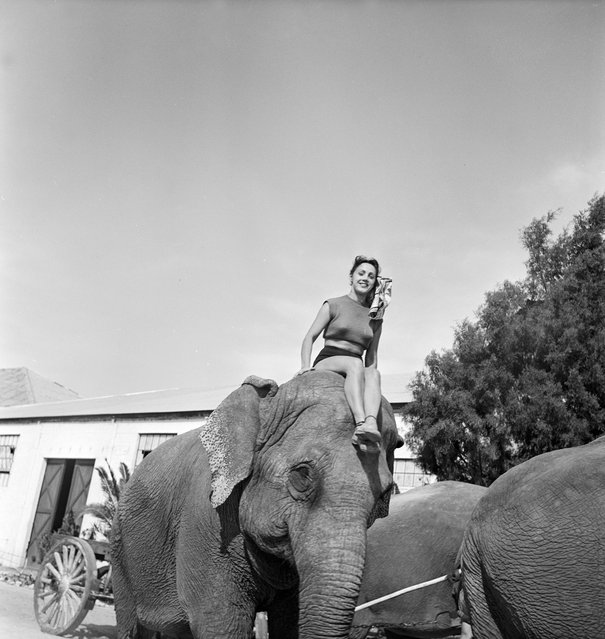 A picture of a circus girl sitting on the head of an elephant during a rehearsal for the Ringling Bros. and Barnum & Bailey Circus in Sarasota, FL in 1949. (Photo By Nina Leen/Time Life Pictures/Getty Images)