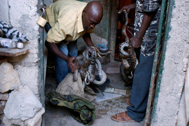 In this January 27, 2013 photo, an assistant to snake handler Saintilus Resilus prepares to wash snakes before using them in pre-Lenten Carnival performances in Petionville, Haiti. Resilus is one of millions of people scrambling to get by in a country where the unemployment rate hovers around 60 percent and most get by on $2 a day. Resilus has used snakes and other animals to earn a little money since at least 1974. (Photo by Dieu Nalio Chery/AP Photo/Matt Dayhoff)