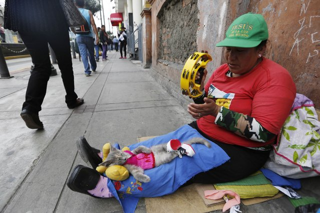 A woman with a kitten on her lap plays the tambourine while asking for money at a street in downtown Lima, November 14, 2014. (Photo by Mariana Bazo/Reuters)