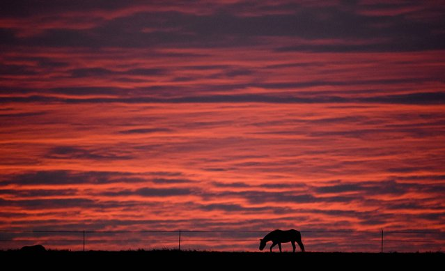 A horse is silhoetted against the morning sky on a meadow in Luehnde near Hannover, northern Germany, Monday, November 10, 2014. (Photo by Julian Stratenschulte/AP Photo/DPA)