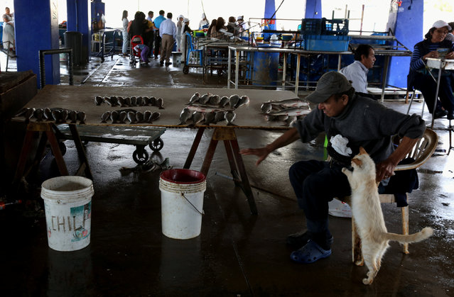 A man with a cat sells fish at a market at Pescadores beach in the Chorrillos district of Lima, Peru, November 29, 2017. (Photo by Mariana Bazo/Reuters)