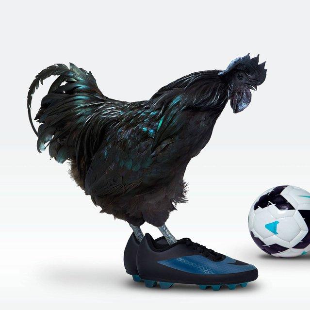 """Nice Pecks"" calendar: Football. (Photo by The happy egg co.)"