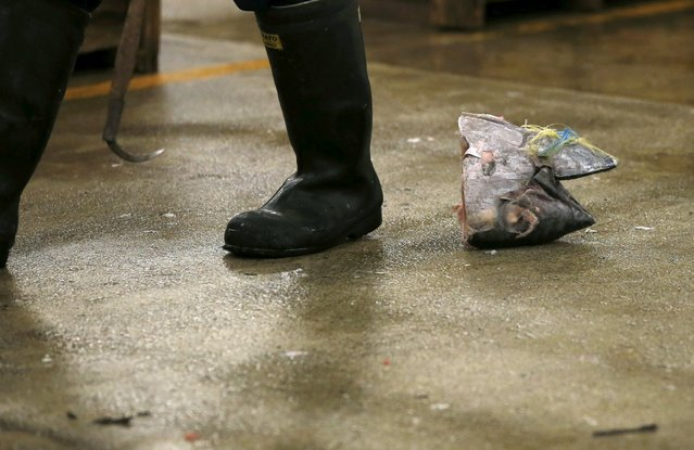 A wholesaler walks past a head of frozen tuna after the New Year's auction at the Tsukiji fish market in Tokyo, Japan, January 5, 2016. (Photo by Toru Hanai/Reuters)