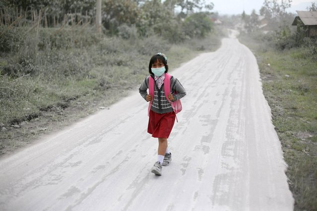 A student walks on a road covered with volcanic ash from the eruption of Mount Sinabung in Tiga Nderket, North Sumatra, Indonesia, Wednesday, November 6, 2013. The 2,600-meter (8,530-foot) -high volcano has been erupting since Sunday, unleashing volcanic ash high into the sky and forcing the evacuation of villagers living around its slope. (Photo by Binsar Bakkara/AP Photo)