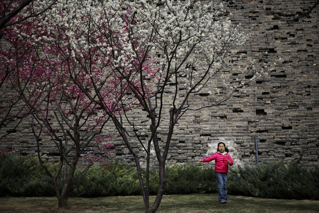 A girl blows soap bubbles near blooming plum blossoms at a public park in Beijing Sunday, March 22, 2015. (Photo by Andy Wong/AP Photo)