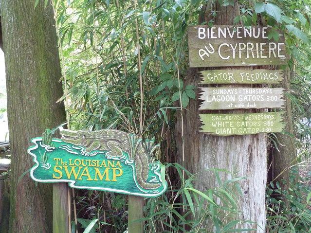 Louisiana Swamps