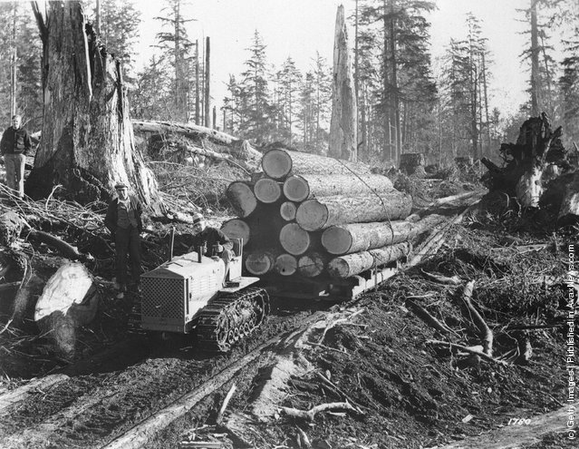 1938: A tractor hauling logs at a lumbering camp in Oregon, USA