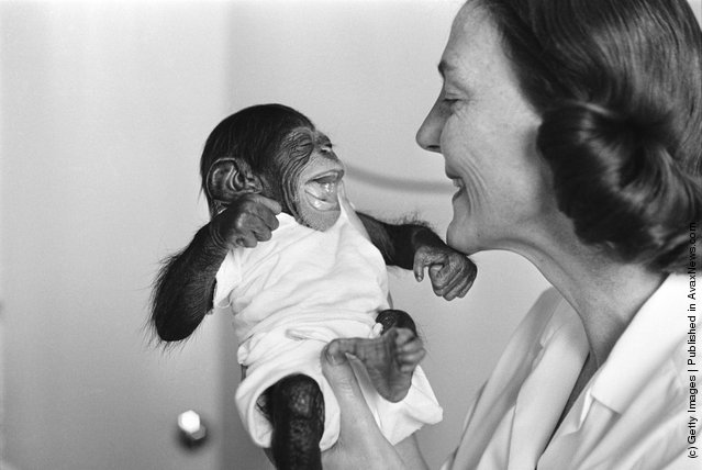11th January 1966:  Dr Vera Gatch holding Mae, a baby chimpanzee