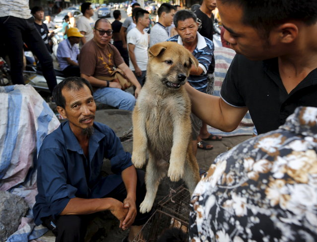 A customer holds a puppy for viewing at Dashichang dog market in Yulin, Guangxi Autonomous Region, June 21, 2015. (Photo by Kim Kyung-Hoon/Reuters)
