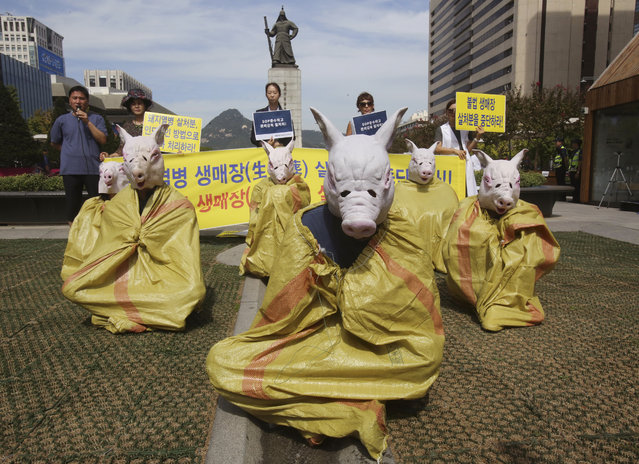 """Animal right activists wearing pig masks stage a memorial rally for those slaughtered due to African swine fever in Seoul, South Korea, Thursday, September 26, 2019. South Korea on Wednesday said it was intensifying efforts to clean farms around the country as it scrambles to contain the spread of the highly contagious African swine fever that has ravaged farms near its border with North Korea. The banner reads """"Stop burial of living pigs"""". (Photo by Ahn Young-joon/AP Photo)"""